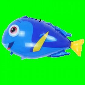 Balon ryba niebieska